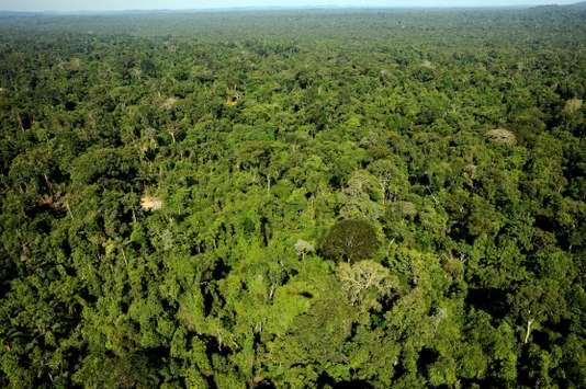 Brésil : la justice suspend l'autorisation d'exploiter une réserve d'Amazonie (Le Monde)