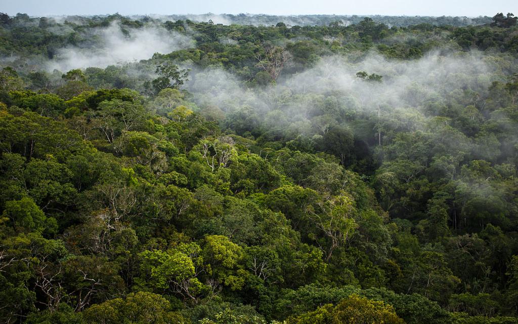 Un défenseur de l'environnement autochtone tué alors que son peuple est pris pour cible par la mafia forestière (Survival)