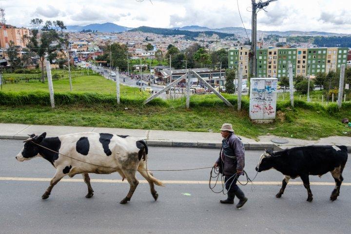 À Bogotá, l'agriculture urbaine sème l'espoir dans le béton (un reportage photos de Jérémie Lusseau/Reporterre)