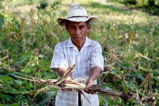 La sécheresse et le réchauffement climatique commencent à affamer l'Amérique centrale