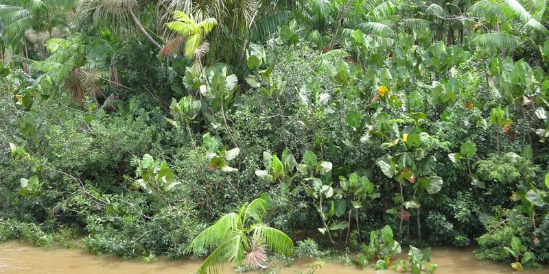 Pérou : Une marée noire en Amazonie pousse les autorités à déclarer une « urgence sanitaire »