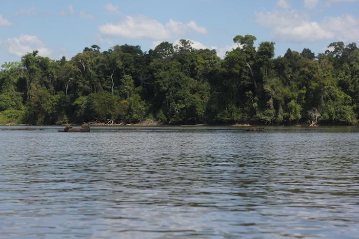 Le fleuve Maroni traverse la forêt équatoriale et marque la frontière entre la Guyane et le Suriname.