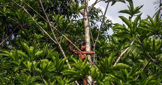 Brésil: des orpailleurs suspectés du meurtre violent d'un indigène dans une réserve protégée ( Claire Gatinois/ Le Monde)