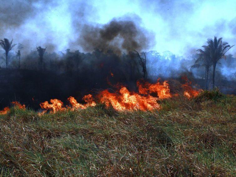 Le Brésil est toujours en flammes, mais la police harcèle les écolos (Adriana Carvalho / Reporterre)