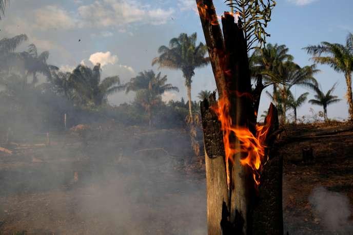 Au Brésil, sécheresse et déforestation font bondir de 83 % le nombre d'incendies (Le Monde)