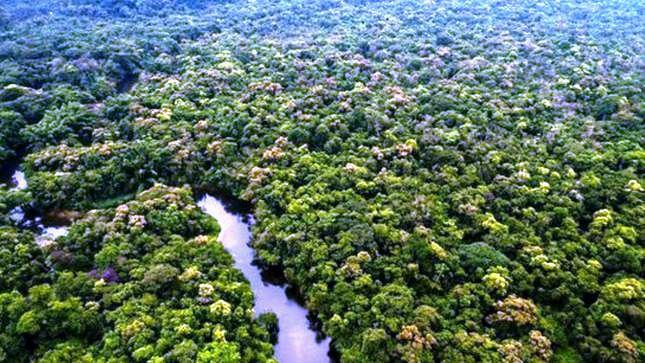 L'Amazonie reste en proie à la déforestation (Aline Timbert / Actu Latino)