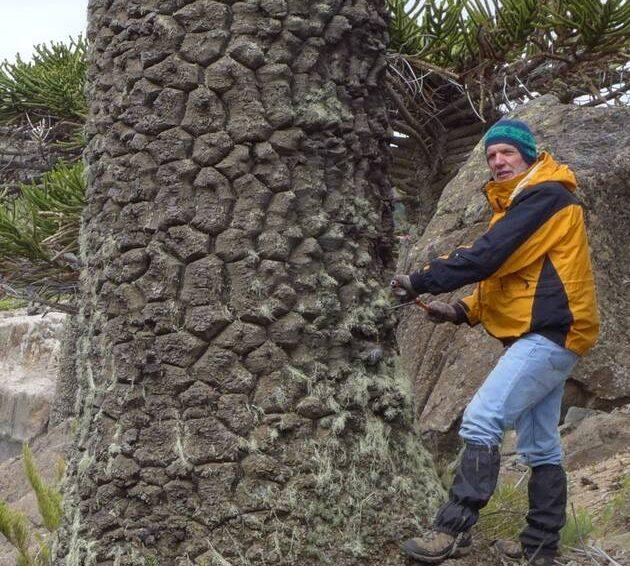Environnement. La mémoire des arbres d'Amérique du Sud révèle ses secrets sur le climat (Alan Loquet / Ouest France)