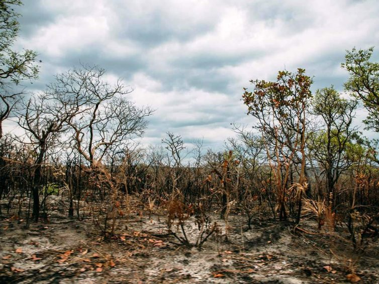 Comment des entreprises et banques européennes participent à la destruction des forêts et savanes du Brésil (Réseau européen des observatoire des multinationales ENCO / Bastamag)